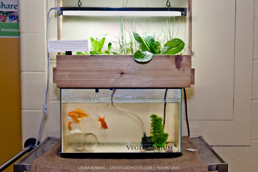 Useful Easy Diy Aquaponics System