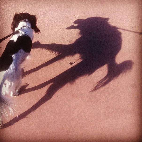 funny-shadow-fails-illusions-14