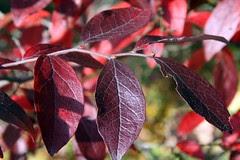 leaves 14