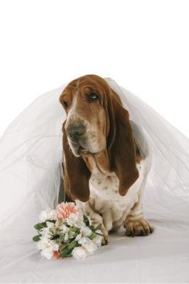 Let your beloved pooch participate in your wedding for a memorable day.