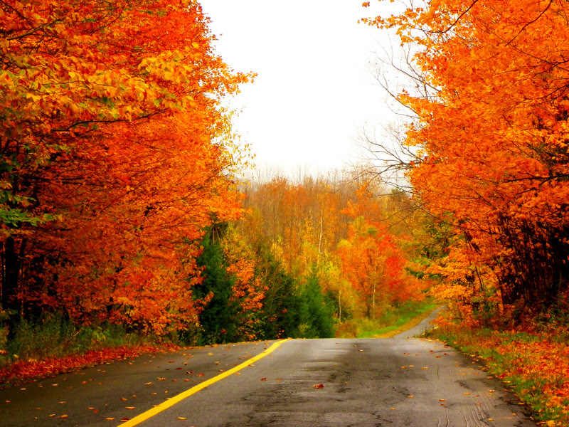 The Road Leading To Winter