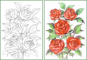 バラの作品 大人の塗絵 バラの描き方 塗り絵で癒し 風景画 花の絵