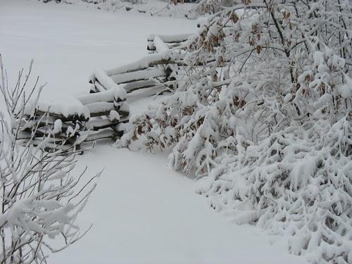 snowy14Jan08-8330