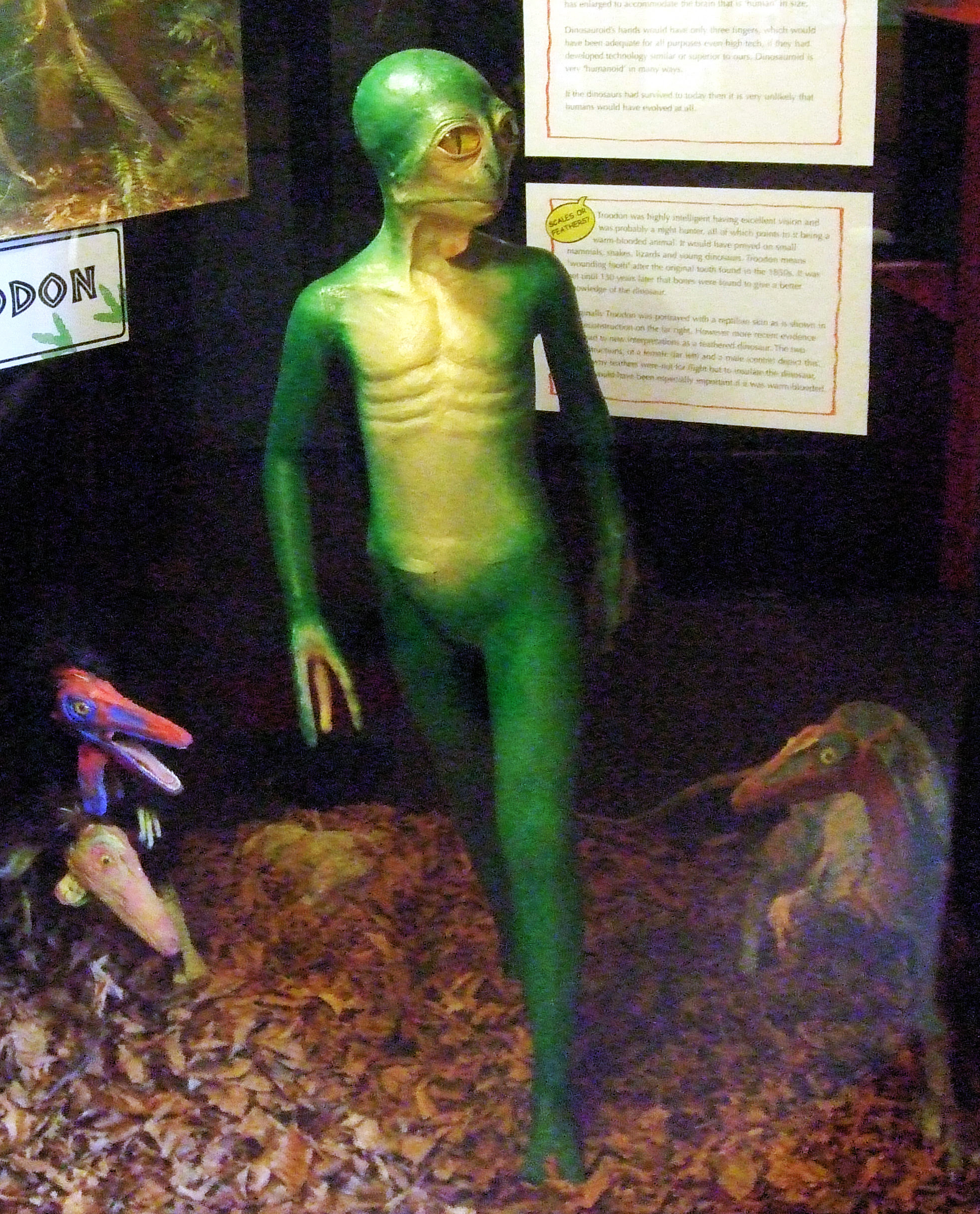 Recreación de la hipotética Evolución del Troodon