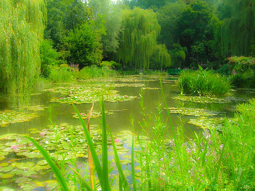 Lily Pads at Giverny, France by Colin Cronin