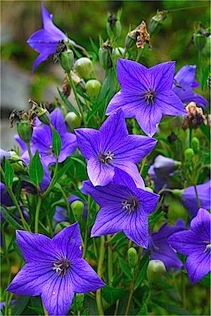 那須 7月の花 Benasu 那須高原の歩き方