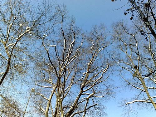 Gli alberi di sole e neve by durishti
