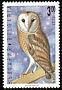 Western Barn Owl Tyto alba