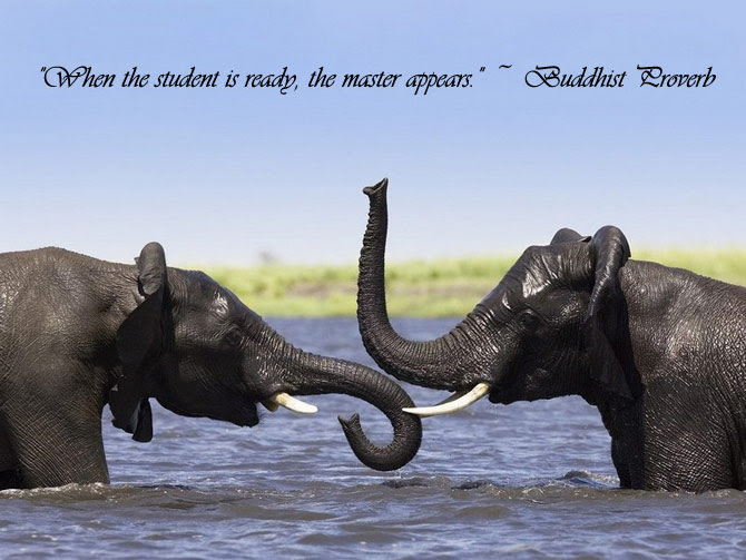 Latest HD Animal Pictures With Life Quotes ...