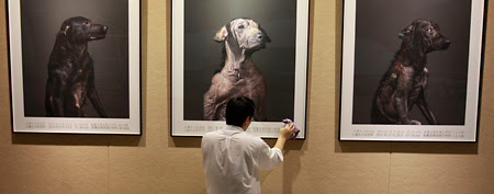 Taiwanese photographer Tou Chih-kang hangs his portraits of the final moments in the lives of shelter dogs for a public exhibition in Taoyuan, in northern Taiwan. (AP)