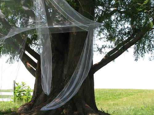 tree veiled
