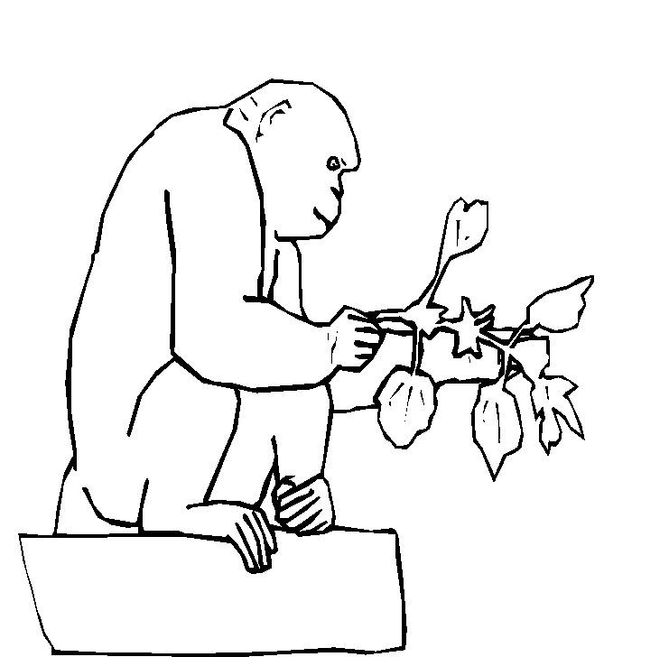 Scimmie 6 Disegni Per Bambini Da Colorare