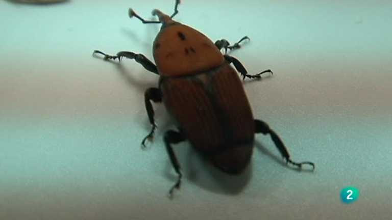 El escarabajo verde - Escarabajo de destrucción masiva