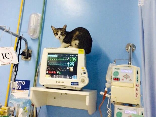 Animal estava sobre equipamentos da Unidade de Cuidados Intermediários do hospital do Câncer (Foto: Reprodução / Facebook de Andrea Murad)