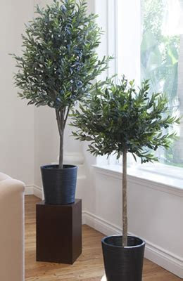 Trees, Potted Plants