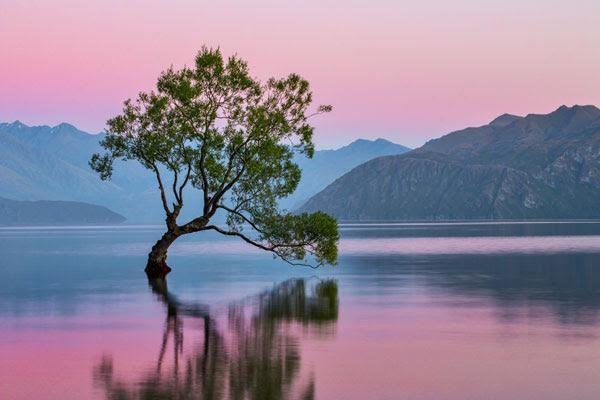 "perierga.gr - Το ""μοναχικό δέντρο"" της λίμνης Wanaka!"
