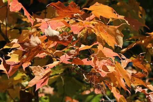 IMG_2862_Orange_Leaves