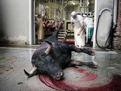 Un toro, tras una corrida.-