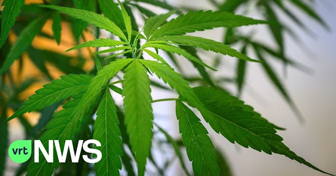 Politie vindt 16 kilo cannabis in auto na achtervolging op E17 in Nazareth