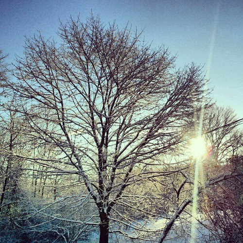 #snow #trees #sun #morning #newhampshire