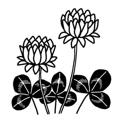 シロツメクサクローバー春の花無料白黒イラスト素材
