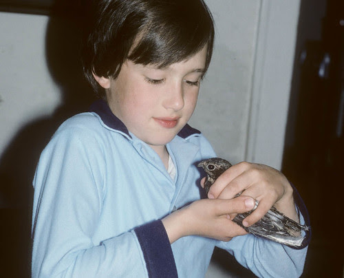 Joey holding Common Nighthawk