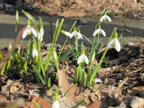 First - flowers of spring