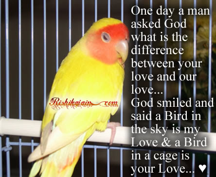 Bird Inspirational Quotes Pictures Motivational Thoughts