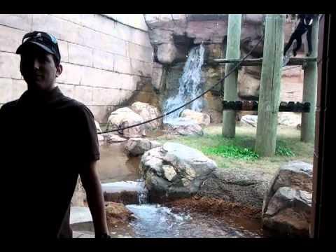 video que muestra como un mono intenta atacar a un visitante en un zoo