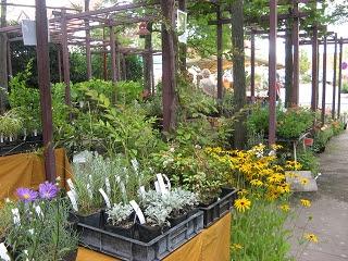 Pflanzenmarkt Maikammer