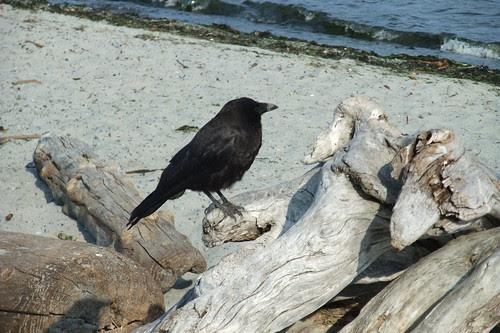crows own beach