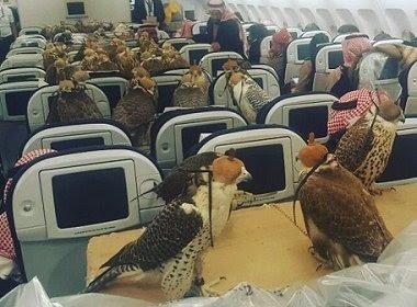 Príncipe saudita compra assentos para cerca de 80 falcões em voo comercial