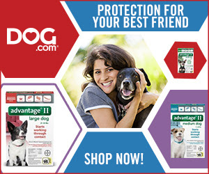 Flea & Tick Protection