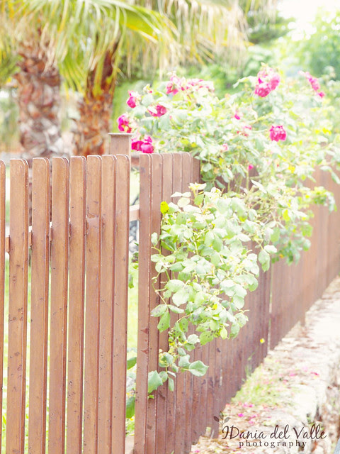 Bloomed Fence