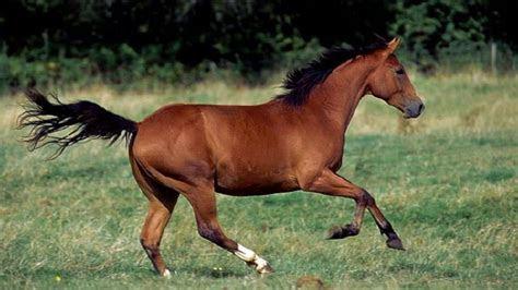 quarter horse screensavers  wallpaper wallpapersafari