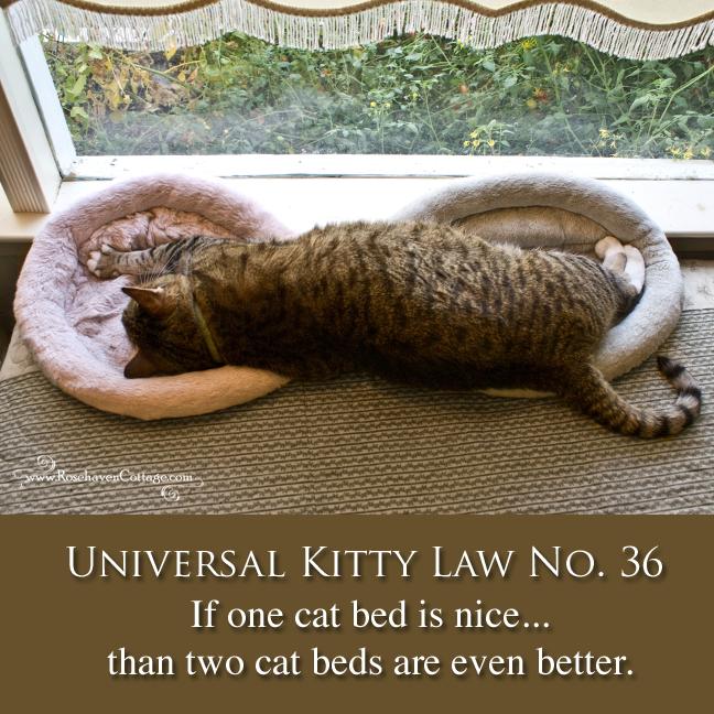 Universal Kitty Law No. 36