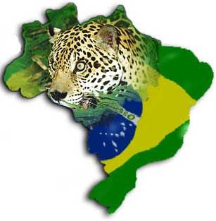 Amazônia brasileira é a menos protegida (também é a maior!)