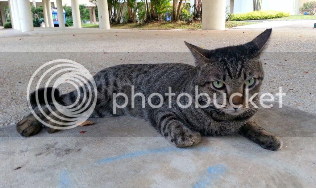 photo CatJRT17May05.jpg