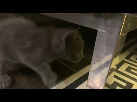 Chỗ ẩn náu khó tin của mèo nhà Trấn Thành. Ai nuôi mèo cần lưu ý!