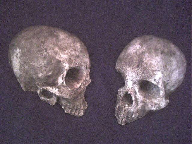 Human Skull Fragments Set two 2 Macabre Gothic Home Garden Decor Brown Haunt Halloween Prop Witchcraft Horror Oddities Bone Strange Weird