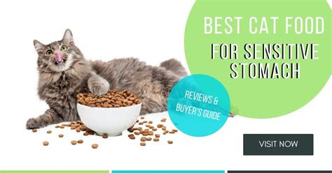 cat food  sensitive stomach reviews buyers