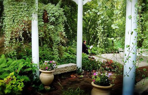 Among the hanging vines and baskets of an outdoor garden