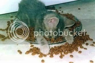 Mačić se prejea pa je ubi oko