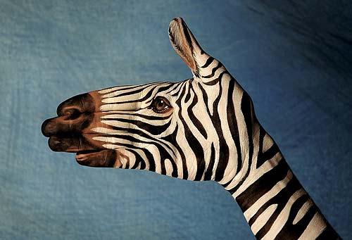 Zebra - Ricerca personale - 2006 (Guido Daniele)