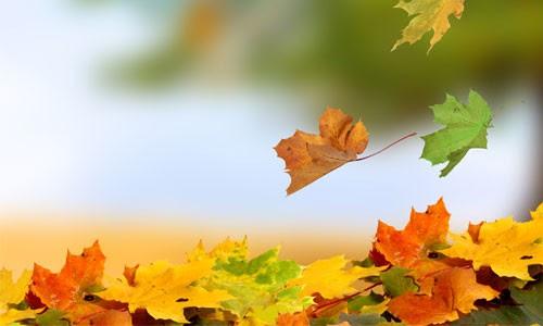 Yapraklar Çevrilirken