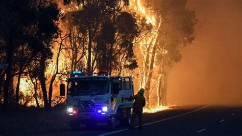 wet cool summers create major fire threat  neglected
