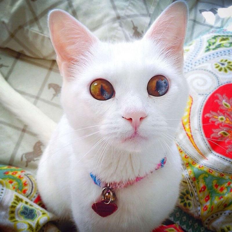 20 animais extraordinariamente belos com olhos ímpares 04