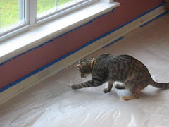 Maggie getting the drop cloth