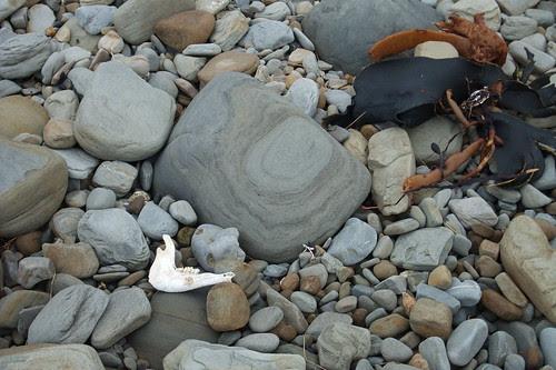 lamb jaw on NZ beach
