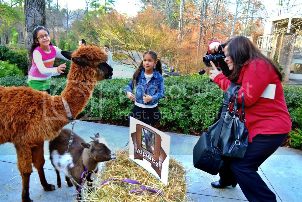Three Kings Day Petting Zoo